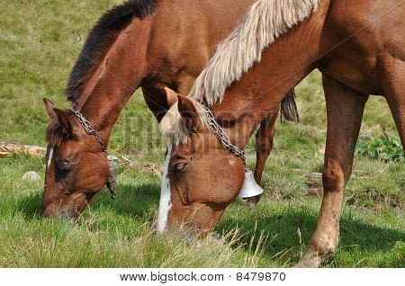 Horses on a pasture.