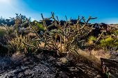 image of valley fire  - Valley of Fire Lava Field in New Mexico with Interesting Flow Stone Lava Rocks and Cactus with Other Desert Plants - JPG