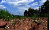 stock photo of dirt road  - pour red dirt road from the waste rock heaps of coal mines - JPG
