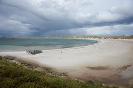 image of falklands  - Curved sandy beach of Yorke Bay in the Falkland Islands - JPG