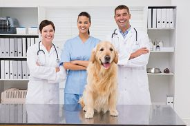 foto of coworkers  - Veterinarian coworker smiling at camera with dog in medical office - JPG
