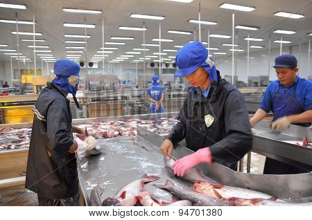 Can Tho, Vietnam - July 1, 2011: Workers Are Killing Pangasius Catfish Before Transfering Them To Th