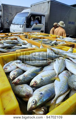 Kien Giang Vietnam - March 13 2014: Fishes are put into baskets waiting for loading onto trucks to a
