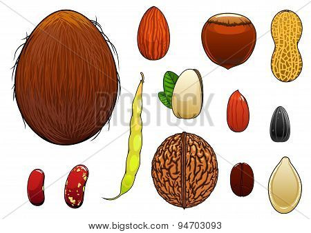 Realistic nuts, seeds and beans in cartoon style