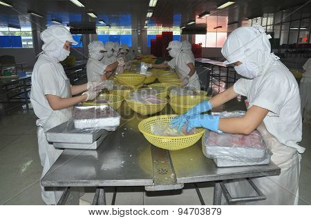 Nha Trang, Vietnam - March 5, 2012: Workers Are Selecting Pangasius Fillet To Put To The Freezing Ma