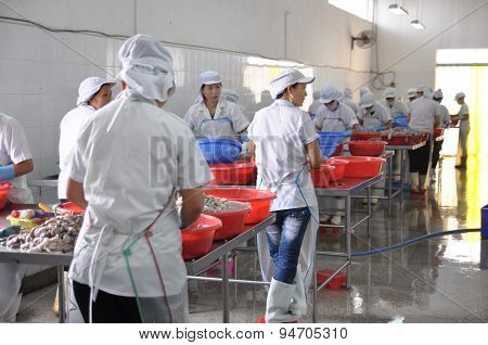 Vung Tau, Vietnam - September 28, 2011: Workers Are Classifying Raw Fresh Octopus To Transfer To The