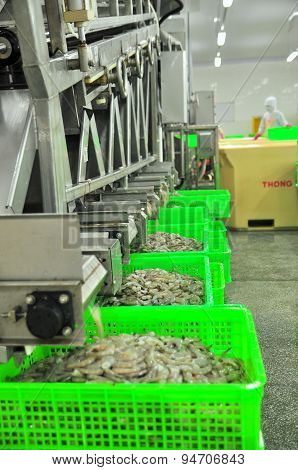 Phan Rang, Vietnam - December 29, 2014: Shrimps Are Peeled And Sized By Machine For Exporting In A S