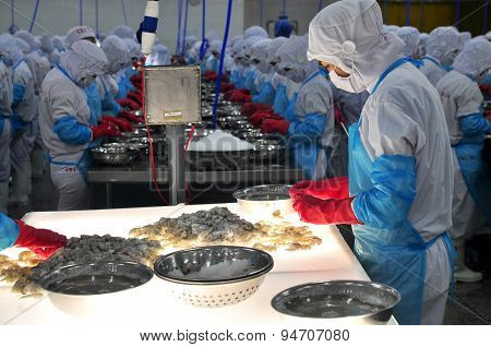 Phan Rang, Vietnam - December 29, 2014: A Worker Is Checking The Color Processed Shrimps For Exporti