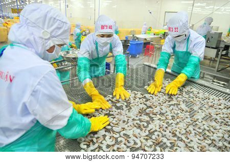 Phan Rang, Vietnam - December 29, 2014: Workers Are Arranging Shrimps In A Line To The Freezing Mach