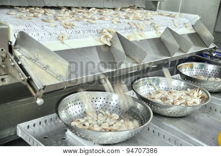 Phan Rang, Vietnam - December 29, 2014: Shrimps Are Peeled And Frozen And Sized For Exporting In A S
