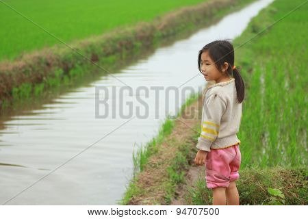 Nam Dinh, Vietnam - March 28, 2010: A Little Girl Is In The Paddy Field In The Countryside Of The No
