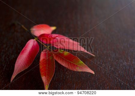 Red Leaves On The Wooden Tray