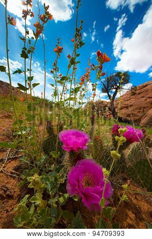 Wild Desert Flowers Blossoms Utah Landscape Vertical Composition