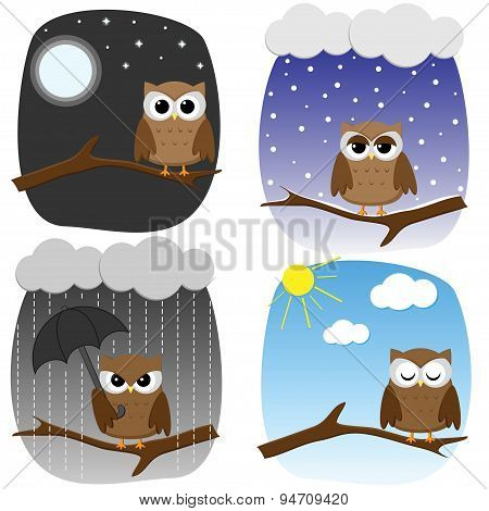 Four Owls On Branch