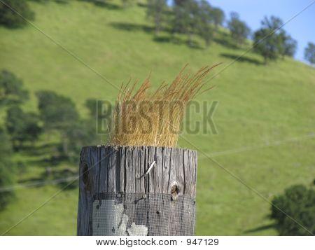 Blonde Fence Post