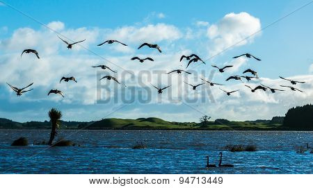 Liftoff Canada Goose.tif