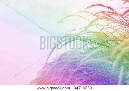 Colorful grass flower