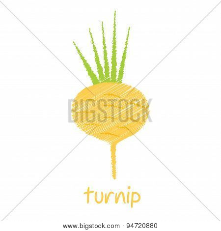 turnip sketch design