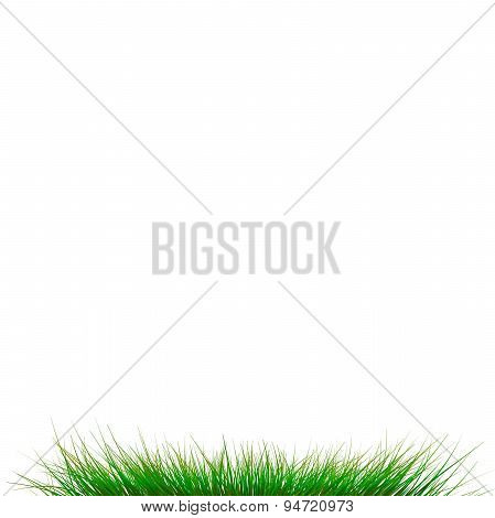 Resh Grass Isolated On Whit