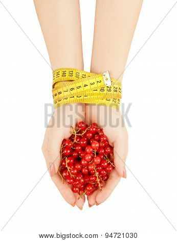 Hands Holding Red Currant Isolated On White