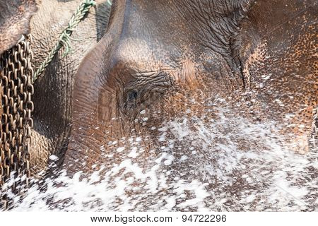 Water Spraying Of An Elephant