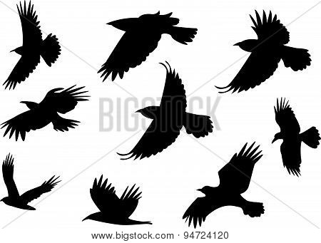 Set Of Silhouette Flying Raven Bird With No Leg.