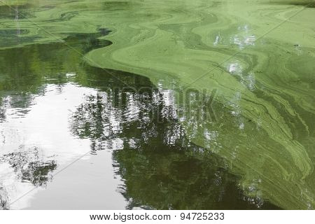 Abstract Green Spawn On Water