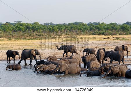 Herd Of African Elephants Drinking And Bathing On Waterhole