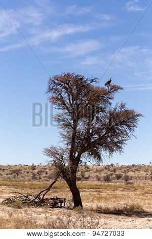 Lonely Dead Tree With Eagle Landscape