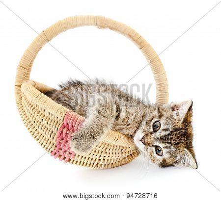 Isolated Kitten In Basket
