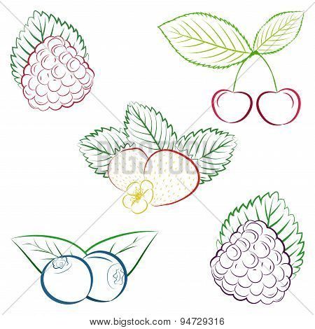 Collection of outlines strawberry, blueberry, raspberry, cherry