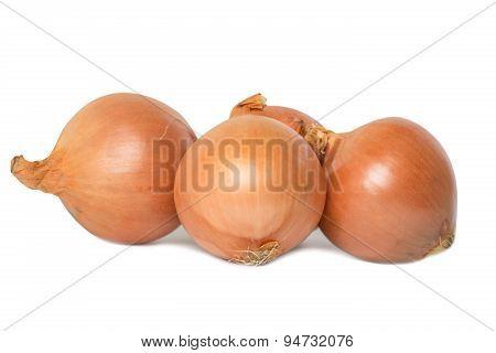 Fresh Onion Group