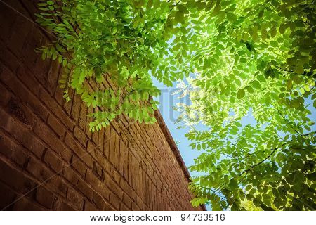 Green Leaves And  Brick Wall Under The Blue Sky