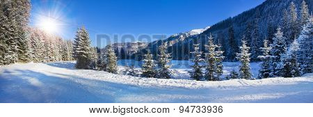 Panoramic View Of Snow Covered Trees