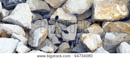Tadpoles In The Pond With Stone In The Mountains