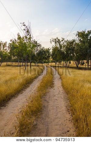 Unpaved Road In The Field