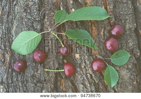 Ripe cherries with leaves on a background of tree bark. Color toning, low contrast