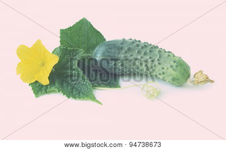 Slices of fresh cucumber and flower. Isolated on white background. 