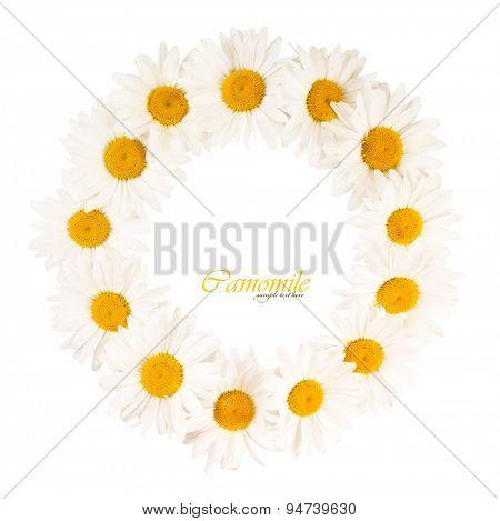 Round frame of white daisies