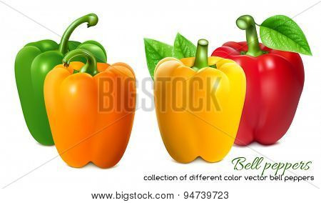Different color bell peppers. Vector illustration.