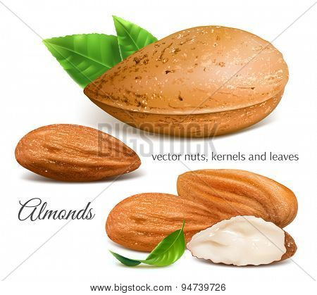 Almonds, kernels and leaves. Vector illustration.