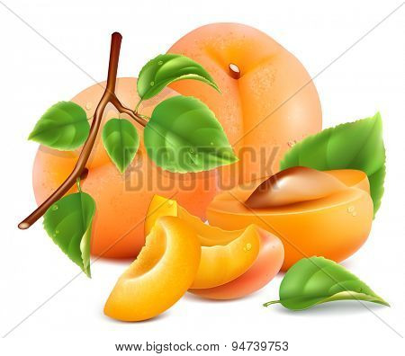Apricots. Vector illustration.