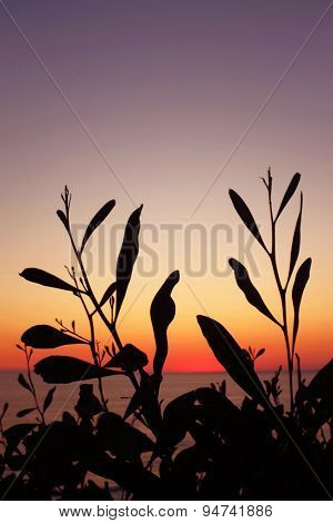 Silhouettes of wild vegetation at the sunset light