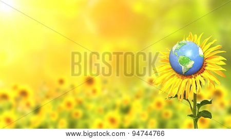 Bright yellow sunflower and Earth on sunny background. Elements of this image furnished by NASA