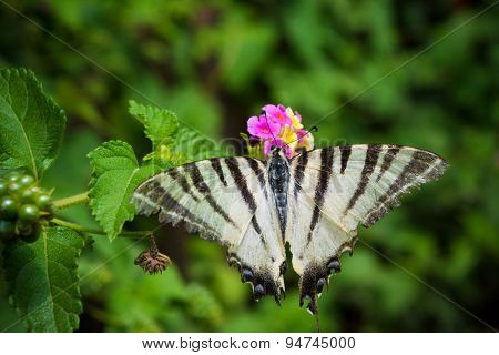 Butterfly on a flower with green leaves in a background