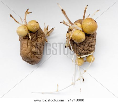 The vegetable  potatoes on a background. Face.