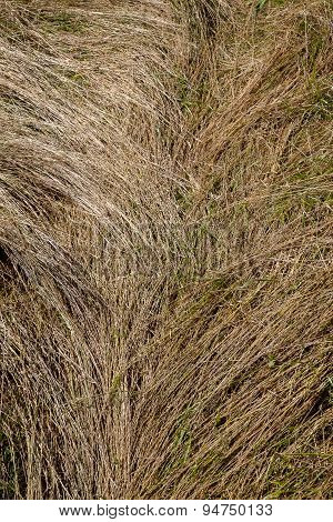 Close Up Of Hay Field
