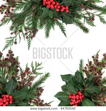 Winter and christmas floral border with holly and red berries, ivy, fir and cedar cypress over white background.