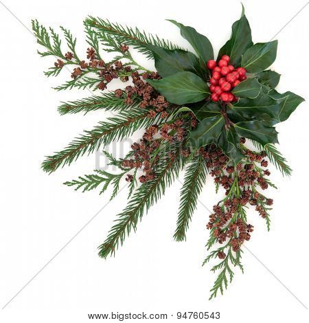 Christmas flora with holly and red berries, ivy, fir and cedar cypress over white background.