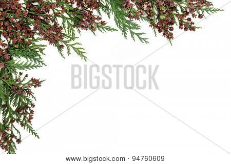 Cedar cypress leyland abstract border over white background.